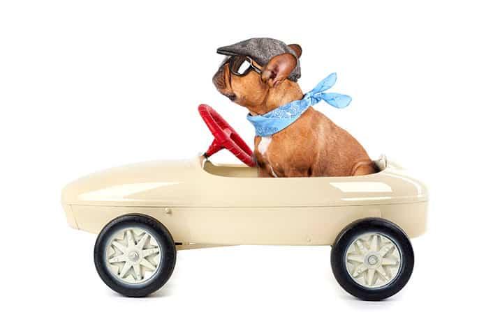 dog-driving-aog-marketing